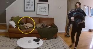 Em vídeo viral, cachorro ajuda dono a carregar roupa suja para lavar