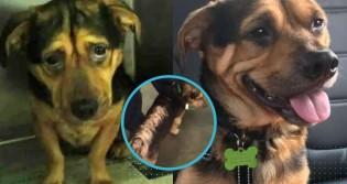 Cão que vivia triste em abrigo e fadado a ser sacrificado é adotado por casal