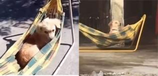 Cena de cão vira-lata descansando na maior plenitude em rede viraliza