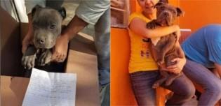 Garoto deixa seu cão pitbull em abrigo para salvá-lo das agressões do próprio pai e relata em carta