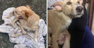 Horas após ser abandonada por dono e correr atrás de carro, cadela grávida dá à luz em rua de SP