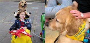 Milagre até para os médicos: Menino de 3 anos com tumor cerebral se recupera após cia de cão terapeuta