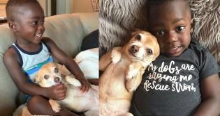 Cão chihuahua conquista amor de garoto adotado que tinha pavor de cachorros