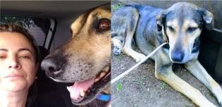 Cão vira-lata com medo de vacina foge de clínica e percorre 10 km em Curitiba