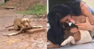Abandonado em estrada em RO, pit bull magro e com deficiência é adotado e ganha lar amoroso