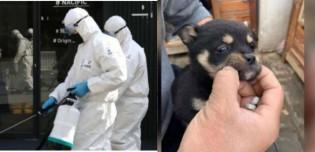 Covid-19: milhares de animais estão sendo abandonados e morrendo de fome na China