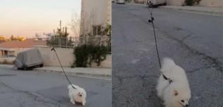 Quarentena: para não sair de casa, homem usa drone para guiar seu cão em passeio