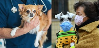 Creche de cães acolhe animais de vítimas do coronavírus gratuitamente