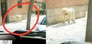 Homem foge de quarentena se fantasiando de cachorro na Espanha