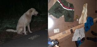 Dono morre atropelado em estrada e seu cão permanece ao seu lado até chegada da polícia em RO