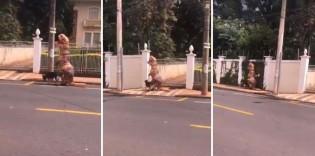 Em SP, homem dribla quarentena se vestindo de dinossauro para passear com seu cão