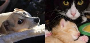 Coronavírus: Abrigos de Nova York relatam não ter mais cães e gatos disponíveis para adoção