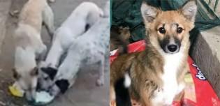 Indianos em quarentena estão abandonando seus pets nas ruas: 'Não têm o que comer'