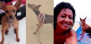Bandido rende aposentada, rouba cachorro pinscher na orla de Itaparica e cão é atropelado