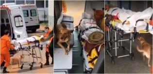 Cão não sai do lado de dono morador de rua que teve convulsão e o acompanha na ambulância até o hospital em Brasília