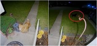 Cachorro visita sua namorada tarde da noite para dar a ela um presente