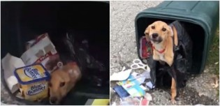 Cadela abandonada enrolada em um saco no lixo é resgatada e ganha nova vida