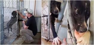 Cachorro em abrigo estende a pata para todos que passam por ele e suplica para ser adotado