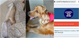 Cachorro morre após dona ter sido impedida de levá-lo ao veterinário durante quarentena obrigatória