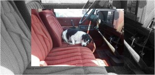 Cachorro com saudades faz questão de ficar todos os dias no caminhão do falecido dono