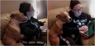 Cão pit bull depressivo por ser maltratado é adotado por estudante e não para de abraçá-la de tão feliz