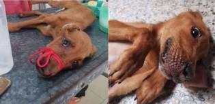 Cão vira-lata dócil que vivia amarrado, sem comida e água ganha lar com o amor que ele sempre mereceu
