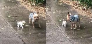 Cadela sai para fazer xixi e volta com um gatinho abandonado que ela resolveu adotar