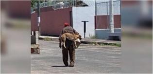 Idoso carrega seu cachorro nas costas para que ele não queime as patas e história gera comoção na internet