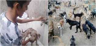 Cuidando de 90 cães, homem enfrenta dificuldades de alimentá-los durante quarentena