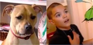 Pouco tempo depois de ser adotada, pit bull salva vida de criança que estava tendo convulsão