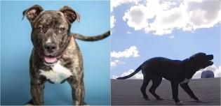 Homem salva pitbull 'perdido' em telhado e ele agradece da forma mais fofinha; assista