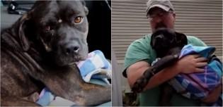 Fazendeiro encontra cachorra extremamente ferida e corre contra o tempo para ajudá-la