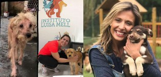 Luisa Mell mostra como o amor e a adoção podem transformar a vida de um cachorro em 'antes e depois'
