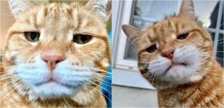 Conheça Marley, o gatinho que parece estar sempre julgando você