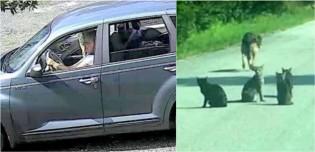 Em vídeo revoltante, mulher é flagrada abandonando seus 11 pets no meio de uma estrada