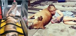 Menina de 6 anos decide permanecer ao lado de seu amado cão idoso até seu último suspiro de vida