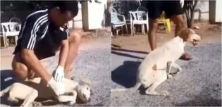 Aluno iniciante de veterinária reanima cachorro que quase morreu envenenado em Goiás; assista