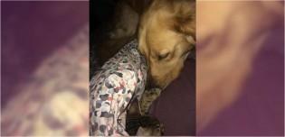 Golden retriever 'adota' gatinha de rua e a traz para casa para ela se juntar à família