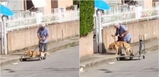 Idoso italiano comove ao levar o seu cão que não anda mais para passear em carrinho adaptado - assista