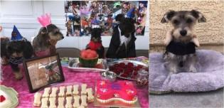 Com 6 meses de antecedência, mulher prepara mega festa de aniversário para sua cadela; vídeo