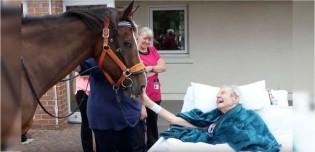 Idoso com doença terminal realiza último desejo antes de falecer: poder tocar em um cavalo - assista