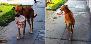 Vídeo: Cão de rua com sede por dias encontra balde descartado e implora por um pouco de água