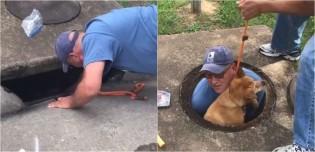 Cachorro idoso perdido que estava preso em bueiro é salvo por equipe de resgate e devolvido ao seu dono; vídeo