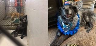 Cachorro encontrado gravemente ferido e triste muda completamente de humor após ser resgatado