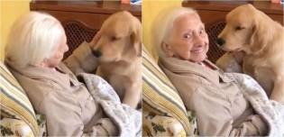 Golden retriever de 5 meses cuida de vovó de 100 anos: 'Provê todo amor do mundo pra ela'