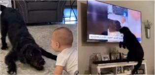 Cachorro tem reação eufórica ao se ver no noticiário; assista