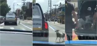 Cachorro segue viatura por 1 km para acompanhar seu dono morador de rua até delegacia; vídeo