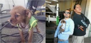 Eletricista e colega de oficina adotam filhote de cachorro abandonado dentro de sacola de lixo