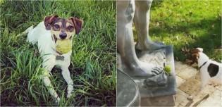 Fã de bolinha de tênis, cachorro fica indignado por estátua não jogar bola de volta para ele; vídeo