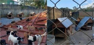 Ciclone destrói chácara de ONG que abrigava 1000 cachorros resgatados das ruas